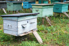 Rows of hives in the apiary. Rows of wooden hives in the apiary are on the green grass Stock Image