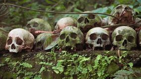 Rows of human skulls in Trunyan Cemetery, shown fom right to left stock video