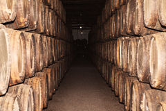 Rows of large oak barrels in a dark cellar. Plant for the produc Stock Photography