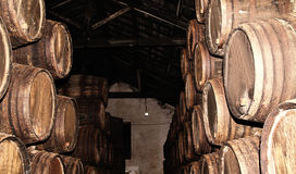 Rows of large oak barrels in a dark cellar. Plant for the produc Royalty Free Stock Photos