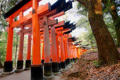 Rows of large red torii at the Fushimi Inari shrine. Rows of large red / orange torii marking the path in the mountain forest at the Fushimi Inari shrine, Kyoto Stock Photography
