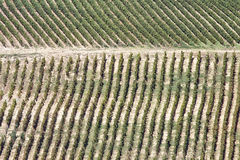 The rows of a large vineyard Royalty Free Stock Images
