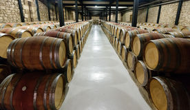 Rows with many  barrels in  winery Royalty Free Stock Photos