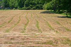 Rows of Mown Hay Stock Image