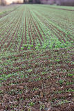 Rows of new crops. Field in the morning, Ficulle (Umbria, Italy Royalty Free Stock Photos