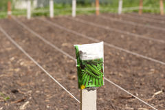 Rows of newly tilled soil. Just sowed green pea seeds Royalty Free Stock Images