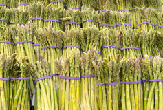 Rows Of Asparagus Royalty Free Stock Photography