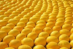 Rows Of Lemons Stock Photography
