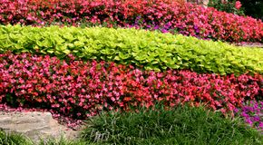 Rows Of Plants Royalty Free Stock Photography