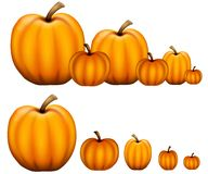 Free Rows Of Pumpkins Stock Photo - 5613380
