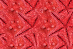 Rows Of Red Starfishes Stock Images