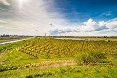 Rows of orchards and solar panels Stock Photos