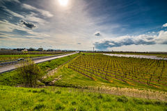 Rows of orchards and solar panels Stock Images