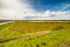 Rows of orchards and solar panels Royalty Free Stock Photography