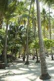Tortuga Palms royalty free stock image