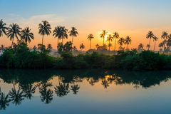 Rows of palm trees reflected in a lake Stock Images