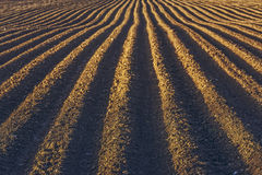Rows pattern in a plowed field Stock Image