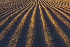 Rows pattern in a plowed field Stock Image
