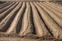 Rows pattern in a plowed field Royalty Free Stock Photography