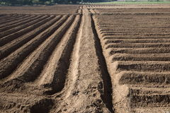 Rows pattern in a plowed field Royalty Free Stock Image
