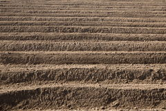 Rows pattern in a plowed field Stock Photography