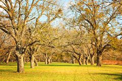 Berry springs pecan trees Stock Photos