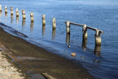 Rows of piles on the sea beach Royalty Free Stock Image