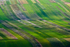 Rows of plants in a cultivated field. Rows of plants in a green cultivated field with light spots Stock Image