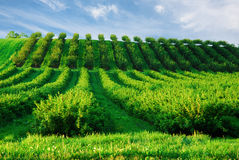 Rows of plants Royalty Free Stock Photo