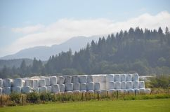 Plastic-Wrapped Hay Bales Near Tillamook, Oregon. These are rows of plastic-wrapped hay bales in a field near Tillamook, Oregon Royalty Free Stock Photo