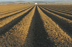 Rows of plowed dirt Royalty Free Stock Images