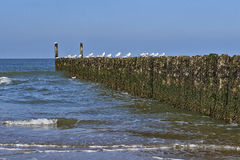 Rows of poles of breakwater Stock Photography