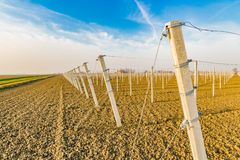rows of poles for fruit trees Stock Photos