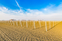rows of poles for fruit trees Stock Images