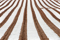 Rows of Polytunnels Royalty Free Stock Photo