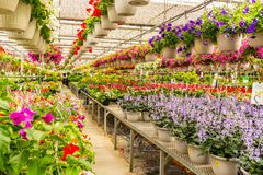 Inside the Garden Center. Rows of potted plants inside the garden center stock image
