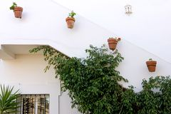 Rows of potted plants on white building Royalty Free Stock Image
