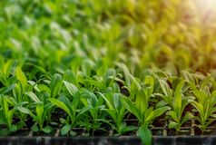 Rows of potted seedlings and young plants royalty free stock photo