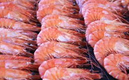 Rows of prawns Royalty Free Stock Photos
