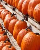 Rows of Pumpkins Stock Photos