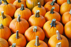 Rows of pumpkins Royalty Free Stock Photos