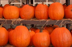 Rows of Pumpkins Royalty Free Stock Photography