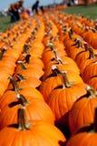 Rows of pumpkins at farm Stock Image