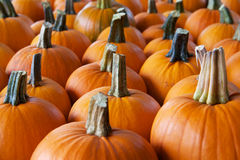 Rows of pumpkins perspective Royalty Free Stock Image