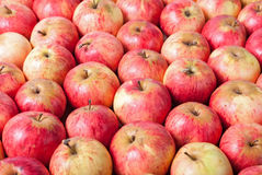 Rows of red apples on a wooden surface. Top View Royalty Free Stock Photography