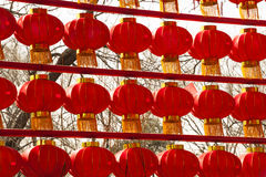 Rows of red lanterns Stock Image