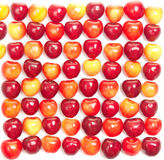 Rows of red and yellow cherries on a white Royalty Free Stock Images