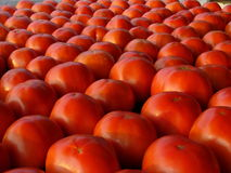 Rows of ripe red tomatoes Royalty Free Stock Photos