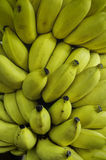 Rows of ripe yellow bananas Royalty Free Stock Photo