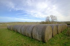 Rows of round bales of straw. Stock Image
